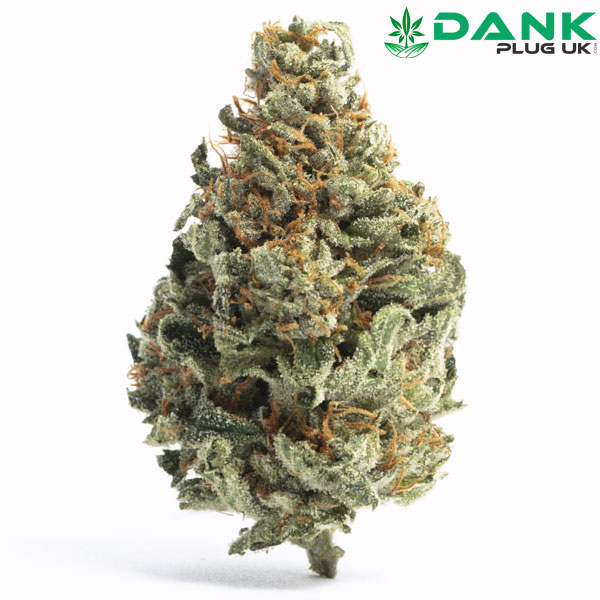 Chocolope Weed Strain UK