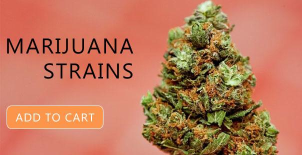 Marijuana Strains for Sale